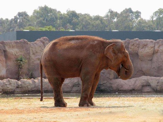 Jardin Zoologique National de Rabat