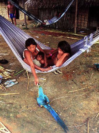 Amazon Rainforest Amp River Tours Day Tours Manaus