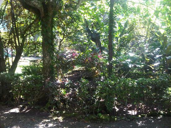 Hotel Aguas Claras: Our garden surrounding area of our cottage