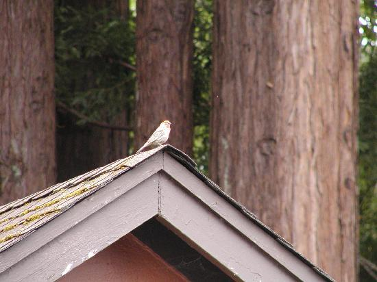 Creekside Inn & Resort: Swallow nesting at Creekside