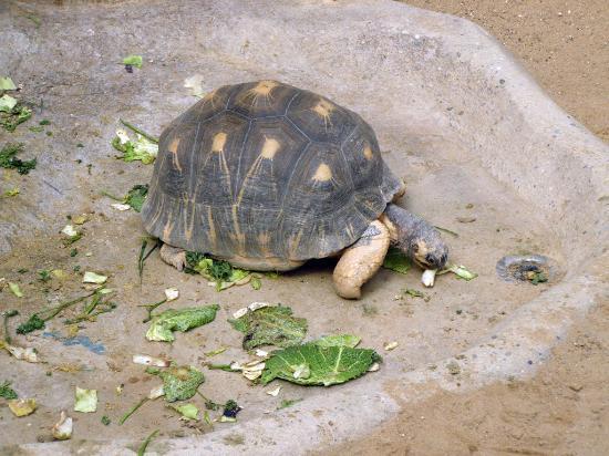 Frankfurt Zoo (Zoologischer Garten Frankfurt/Main) : turtle