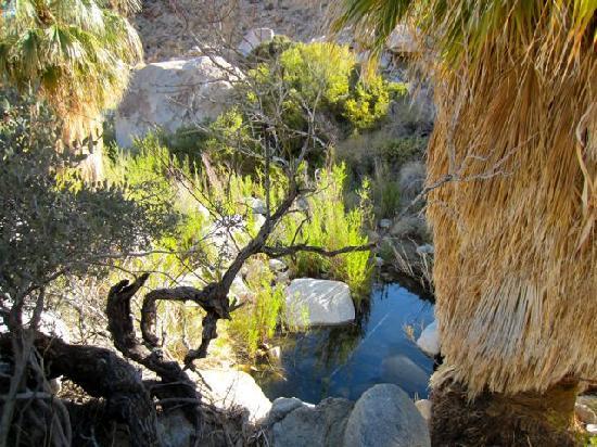 Fortynine Palms Oasis Trail: water in the desert