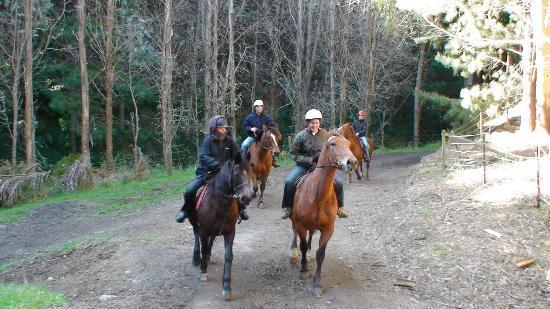 Ohariu Valley Equestrian Centre : A horse trek through the pine trees