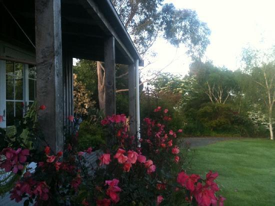 Kamahi Cottage: Early morning - Kamahi Cottage