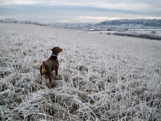 Corston Fields Farm: We're open all year - except Christmas.