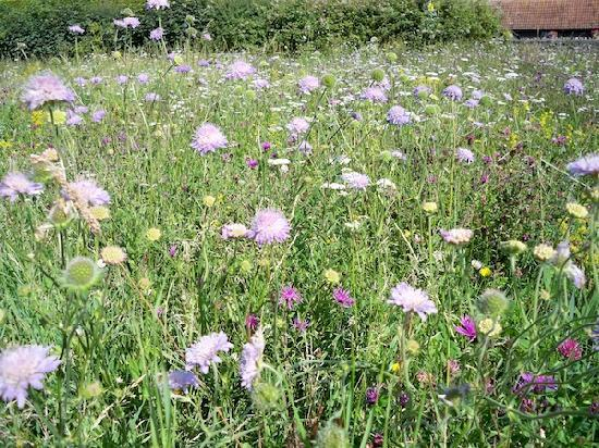 Corston Fields Farm: In the summer, the wildflower meadow is stunning to see.