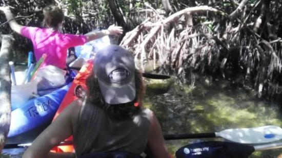 Flow Kayak and Paddle Tours: Navigating the Mangrove channel