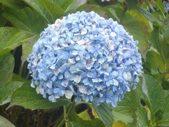 Lagrange Prestige Les Hauts de la Houle : la fleur unique par sa beauté dans ces lieux