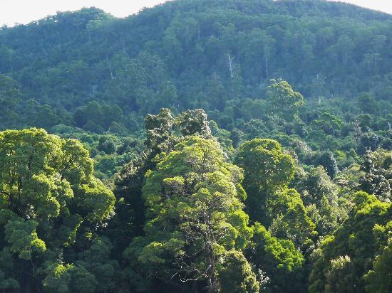 Tarkine Wilderness Lodge: Tarkine forest canopy