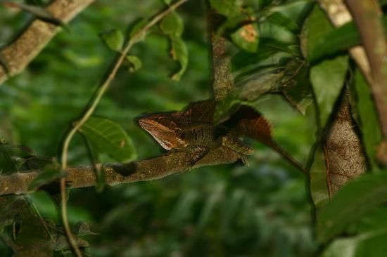 Chunk Head Snake - Picture of Si Como No Resort Wildlife ...