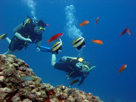 Pemba Island: misali diving pemba
