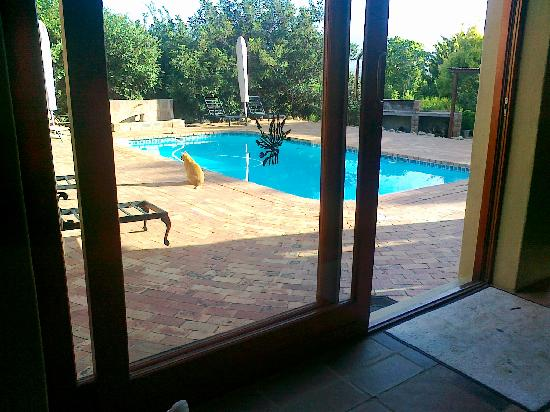 Cape Country Living Guesthouse: Pool