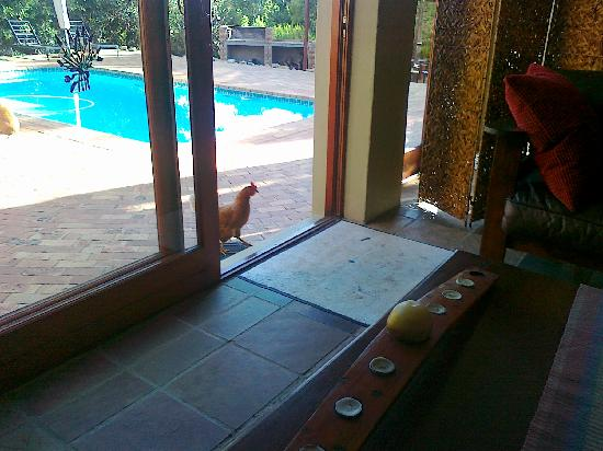 Cape Country Living Guesthouse: Eingangsbereich Haupthaus