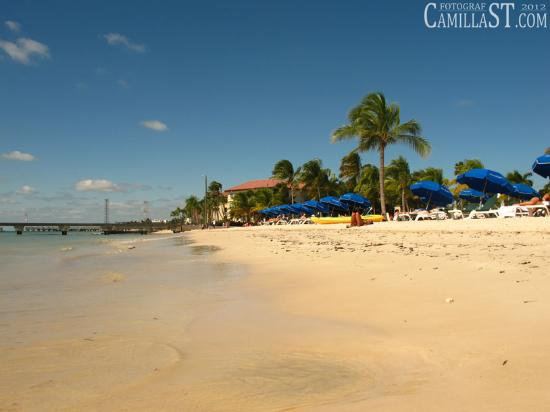 Hotels Near Higgs Beach