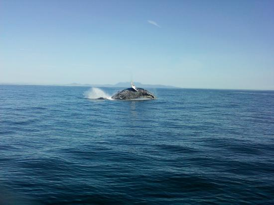 Scorpion Canyon Campground : the whale breach