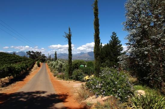 Jordan Winery: Entrance road winery