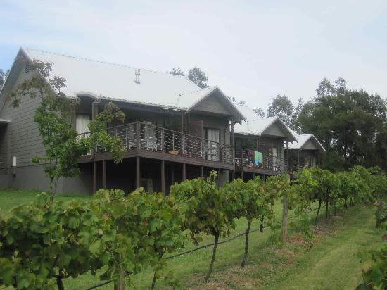 Hermitage Lodge: view of vineyard suite