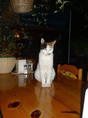 Ferah Pension: テラスにいる猫