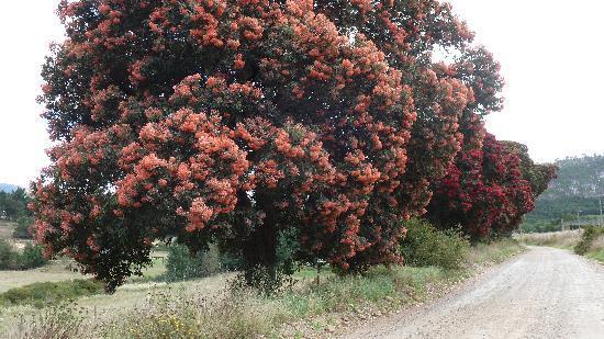 Clair Garden: Is het mooi