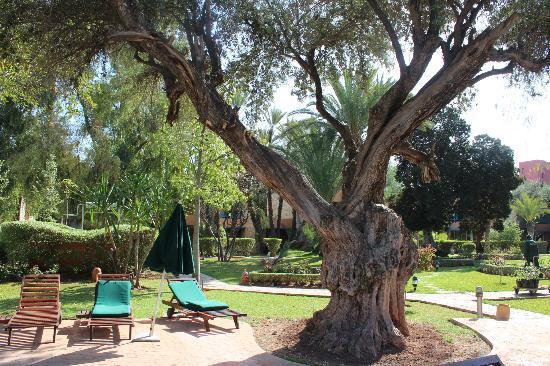 Golden Tulip Farah Marrakech: le parc
