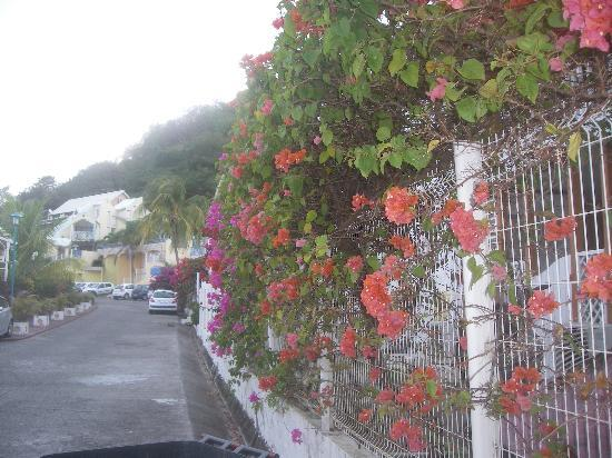 Les Orchidees de Sainte-Anne: mur de bougainvilliers
