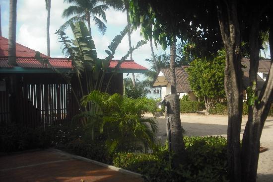 Secret Garden Beach Resort: View from the front porch of the garden bungalow