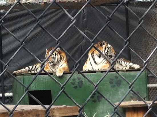 Catty Shack Ranch Wildlife Sanctuary: Pals
