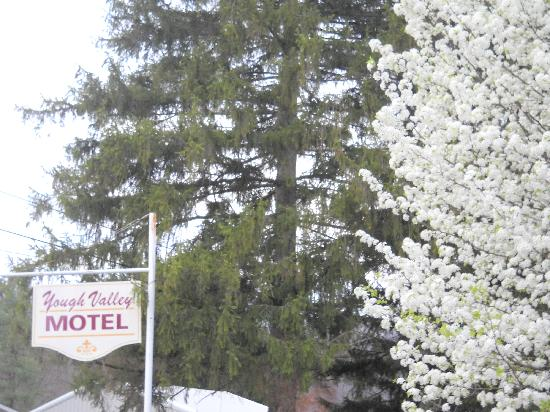 Yough Valley Motel: YVM in spring