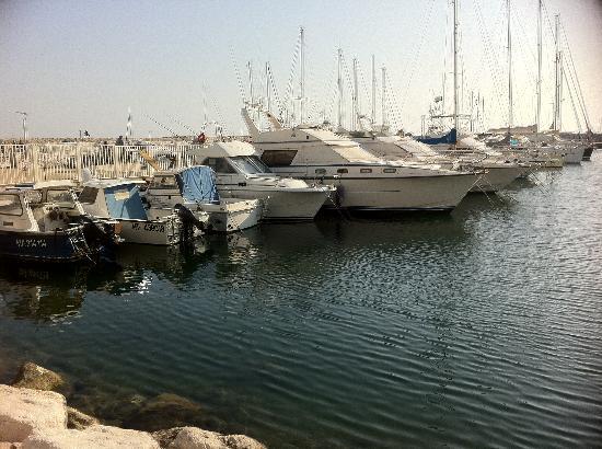 Best Western Hotel Paradou Mediterranee: Le port