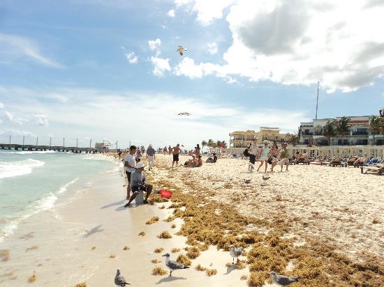 Tres Mundos Hostel : The lovely beach nearby