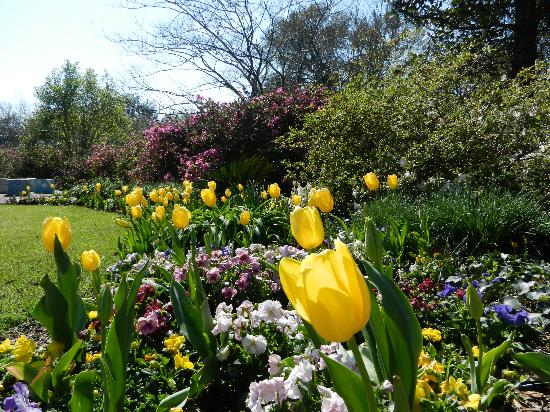 Airlie Gardens : Spring colors