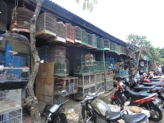 デンパサール鳥市場