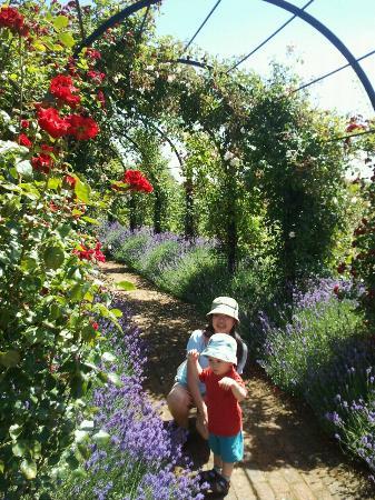 Royal National Rose Society Gardens: RNRS, St.Albans