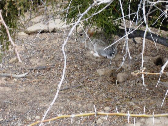 Cottonwood Visitor Center: Bunny along the path