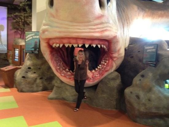 Museum of Discovery and Science: megalodon--- yikes!!