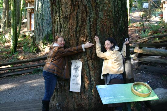 Ocean Breeze Bed and Breakfast: A 1300-year old tree and two gorgeous girls!