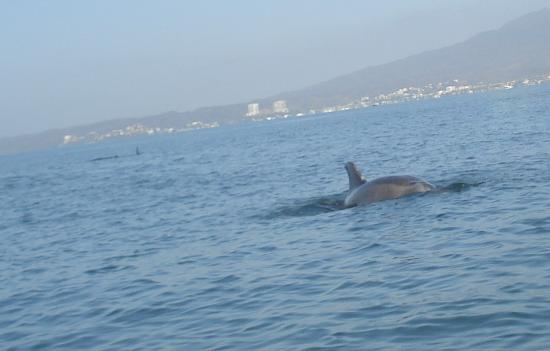 Hotel Riu Vallarta: dolphin