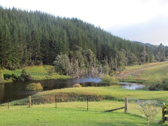 MOT Lodge: view from garden room