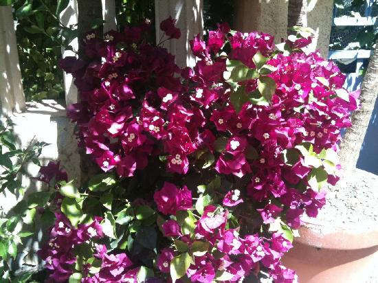 Hotel Le Chardon Bleu: jardin