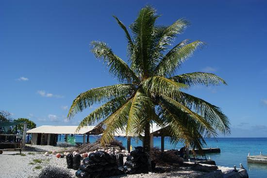 Manapearl Tahiti : La ferme Gauguin's Pearl d'où viennent les perles.