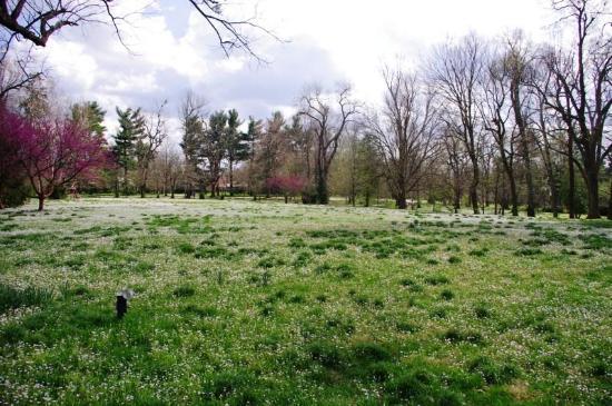 Ashland: The Henry Clay Estate: Walking Grounds on Estate