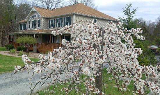Moondance Ridge Bed & Breakfast: Flowering tree in front of Moondance Ridge