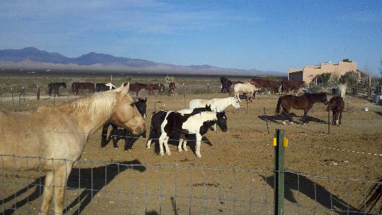 Stagecoach Trails Guest Ranch: Plenty of horses