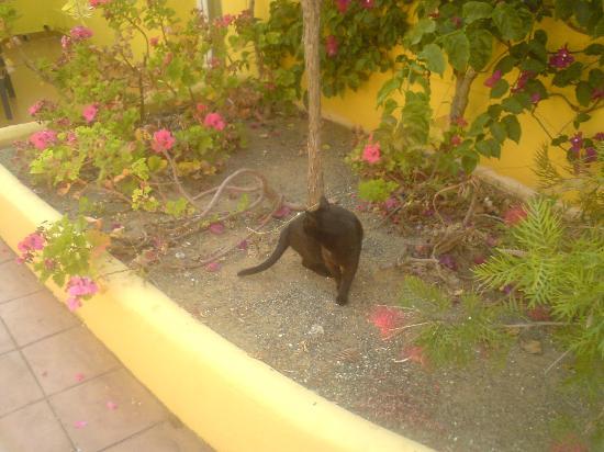 Marbella Playa Hotel: Kätzchen