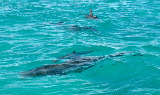 Coral Gardens On Grace Bay: Celebrity Dolphin Jojo, And Family