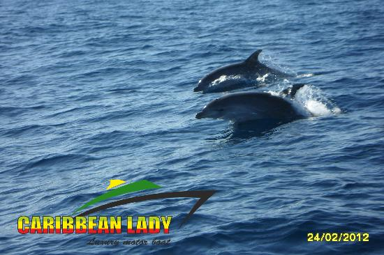 Caribbean Lady Private Tour: Dolphins