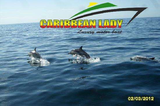 Caribbean Lady Private Tour: More Dolphins !