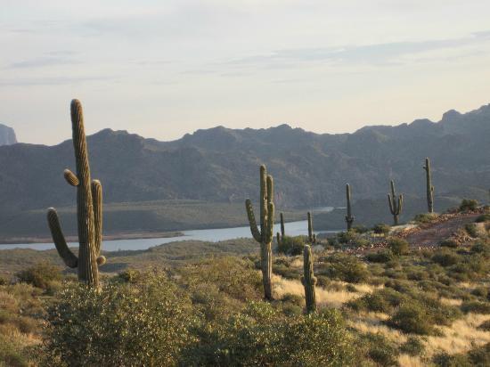 Desert Dog Hummer Adventures: View of part of Saguaro Lake