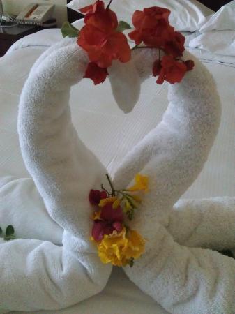 Hilton Sharks Bay Resort: Gorgeous towel swan.