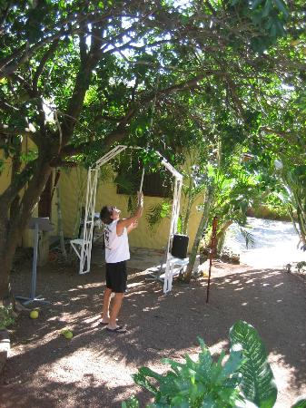 Papagayo Village: Picking grapefruit